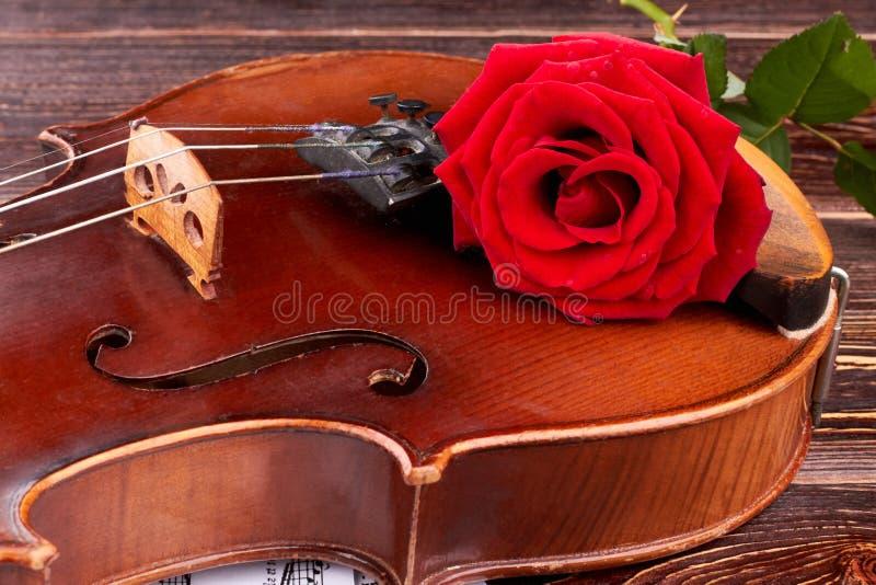 Slut upp den gamla fiolen med den röda rosen royaltyfri bild