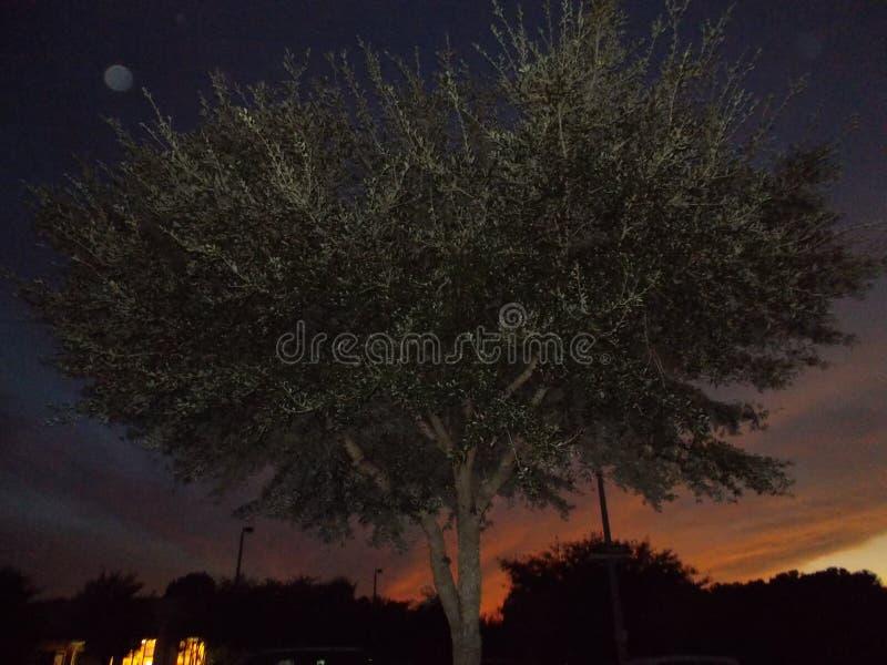 Slut upp färgrik solnedgång för Floridian träd royaltyfria foton