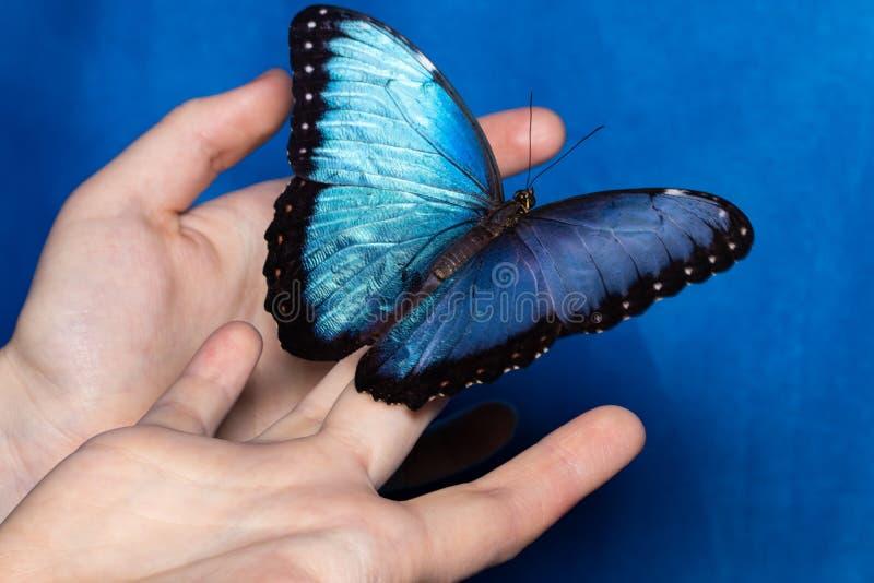 Slut upp fjäril på kvinnahanden Skönhet av naturen royaltyfria foton