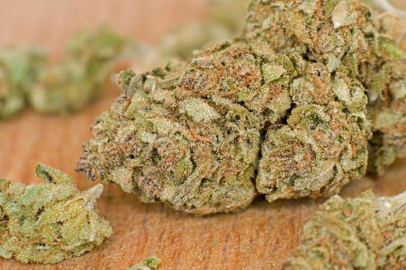 Slut upp fotoet av marijuanaknoppen royaltyfri foto