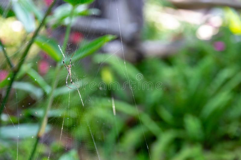 Slut upp främst trädgård för spindel och för bred spindelnät med ljus soluppgång arkivbilder