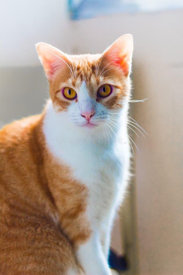 Slut upp grön synad katt arkivbilder