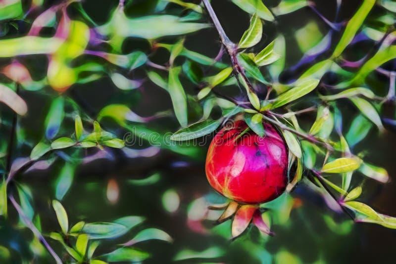 Slut upp granatäpplet och gröna sidor fotografering för bildbyråer