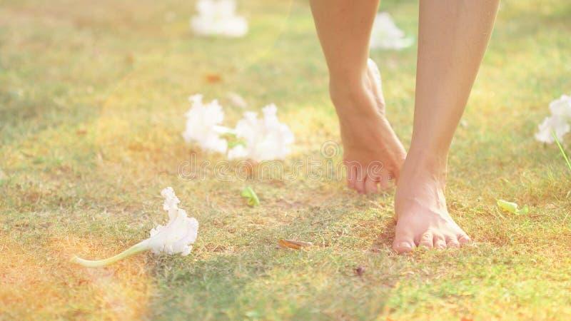 Slut upp härlig ung kvinnlig fot barfota som går på grönt gräs med bakgrund för vita blommor Morgondet fria övar i a royaltyfria foton