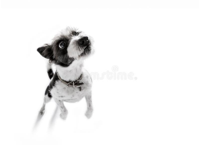 Slut upp hundfetch arkivfoto