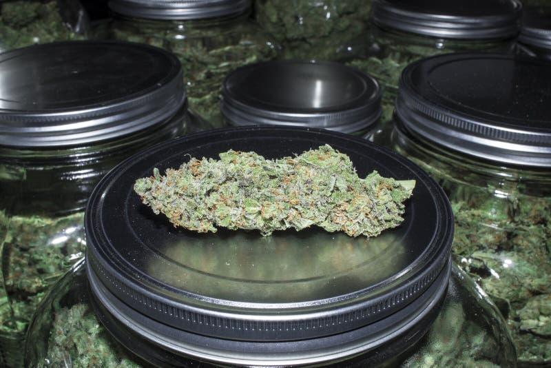 Slut upp marijuanaknoppen med krus som är fulla i bakgrund royaltyfri bild
