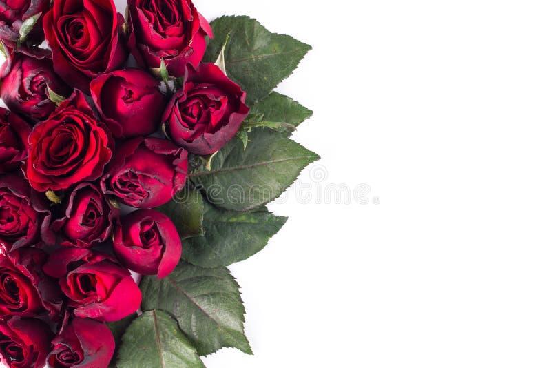 Slut upp naturliga röda rosor Hälsningkort med röda rosor och utrymme för text genom att använda som valentindag arkivfoton
