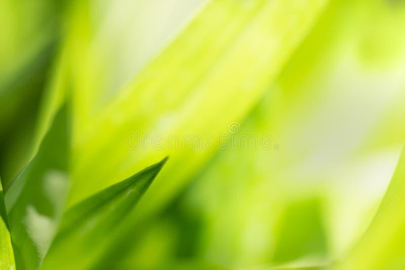 Slut upp natursikt av det gröna bladet fotografering för bildbyråer
