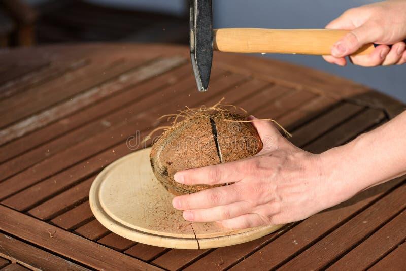 Slut upp på händer som bultar en kokosnöt arkivfoton
