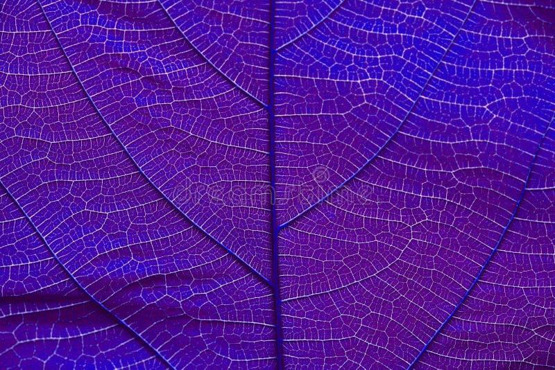 Slut upp på violett bladtextur arkivfoto