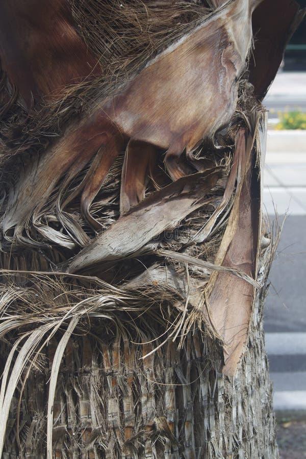 Slut upp palmträdet på vägen royaltyfri foto