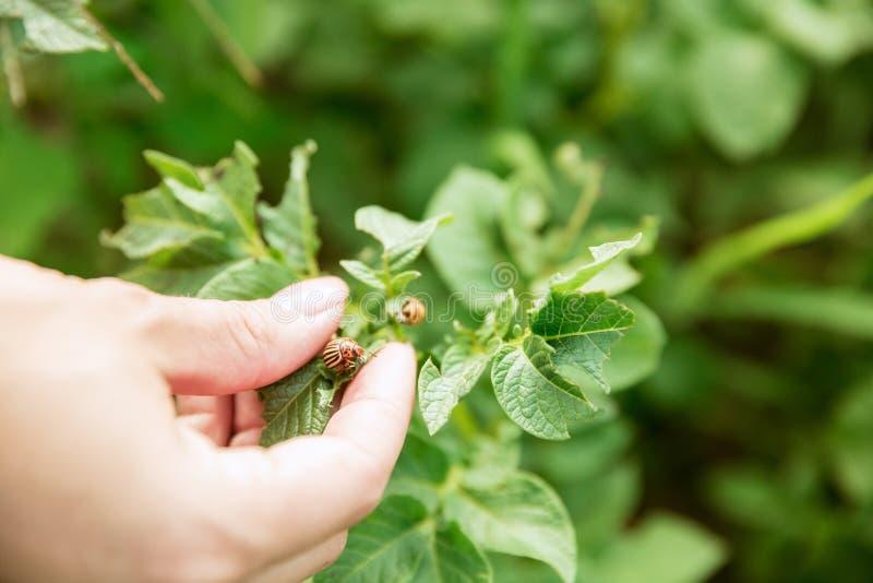 Slut upp photoshot av gröna växter och mänskliga handen som rymmer den royaltyfri bild