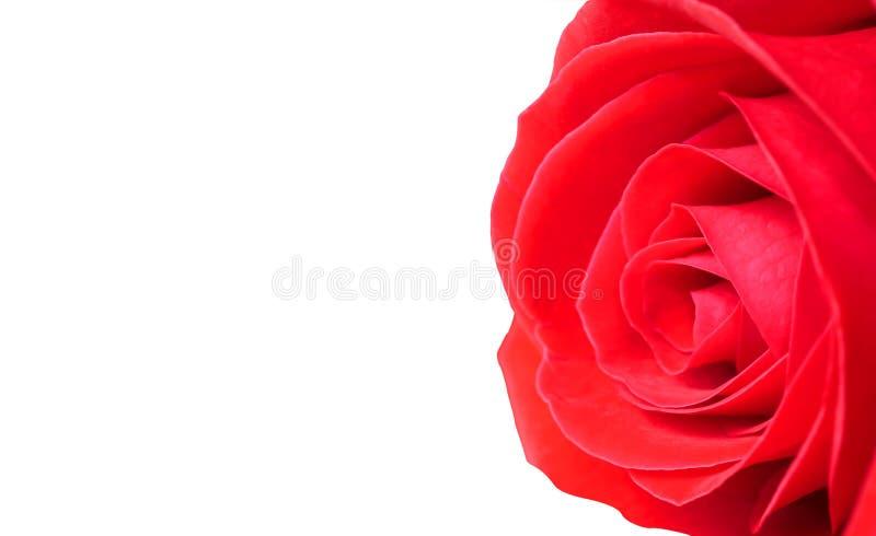 Slut upp röd ros 2 fotografering för bildbyråer