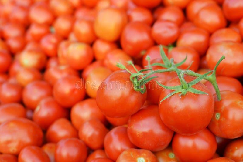 Slut upp tomatbakgrund fotografering för bildbyråer
