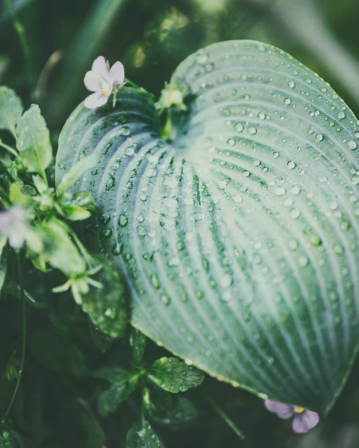 Slutet av det tropiska bladet med vatten tappar upp arkivfoto