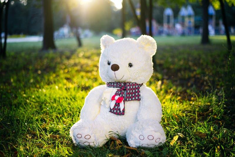 Slutet upp älskvärda bruna exponeringsglas för kläder för nallebjörnen med boksammanträde på gräsfält med linsen blossar Varm ton royaltyfri fotografi