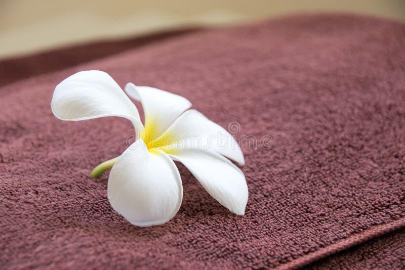 Slutet upp den vita frangipanien blommar på den bruna handduken royaltyfria bilder