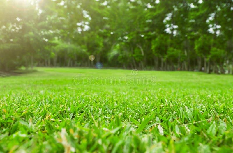 Slutet upp fält för grönt gräs med trädsuddighet parkerar bakgrund, vår royaltyfria bilder