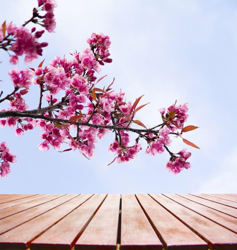 Slutet upp trägolv på härliga rosa färger blommar lös himalayan ch royaltyfri bild