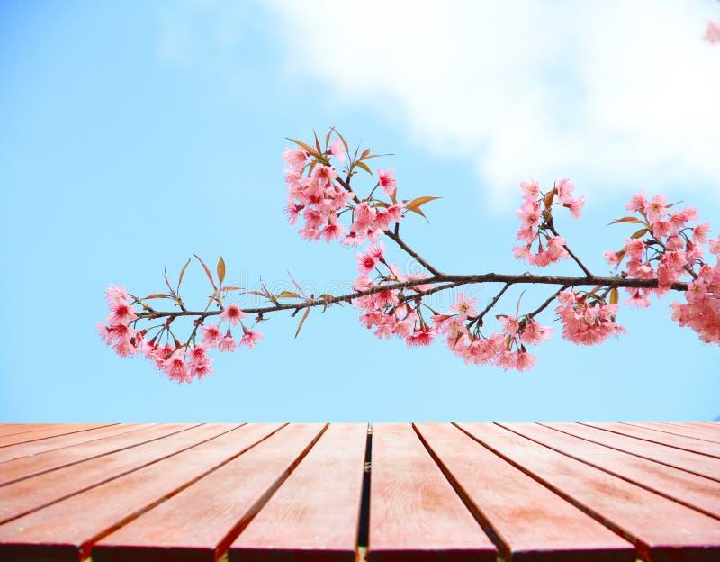 Slutet upp trägolv på härliga rosa färger blommar lös himalayan ch fotografering för bildbyråer