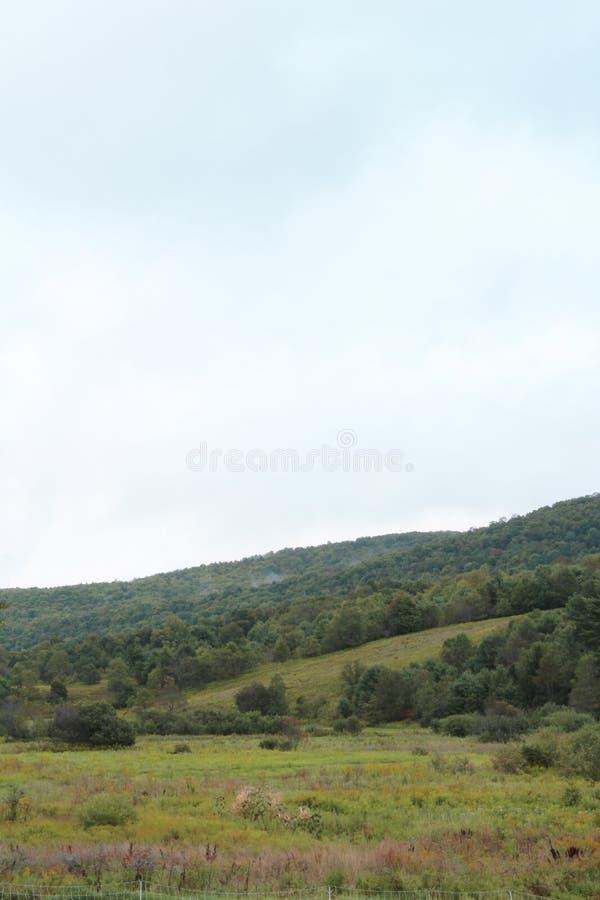 Slutta backen med träd och den gröna ängen i tidig nedgång royaltyfri foto