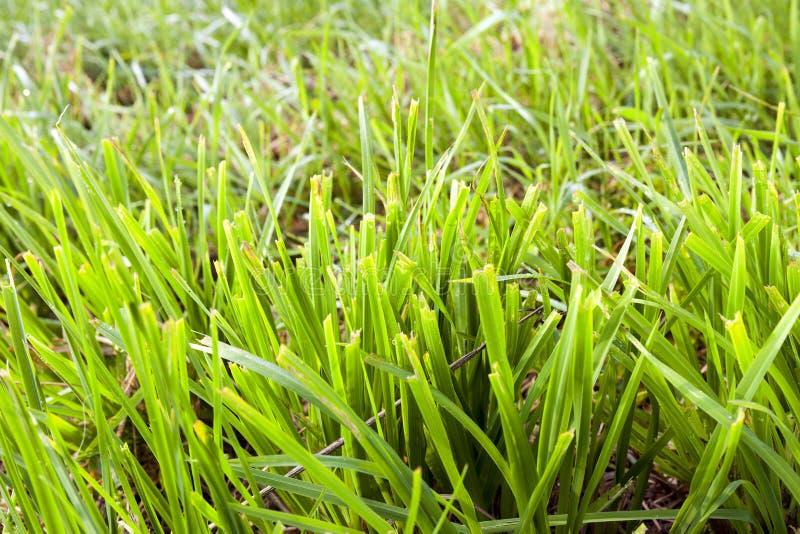 slutta grönt gräs fotografering för bildbyråer