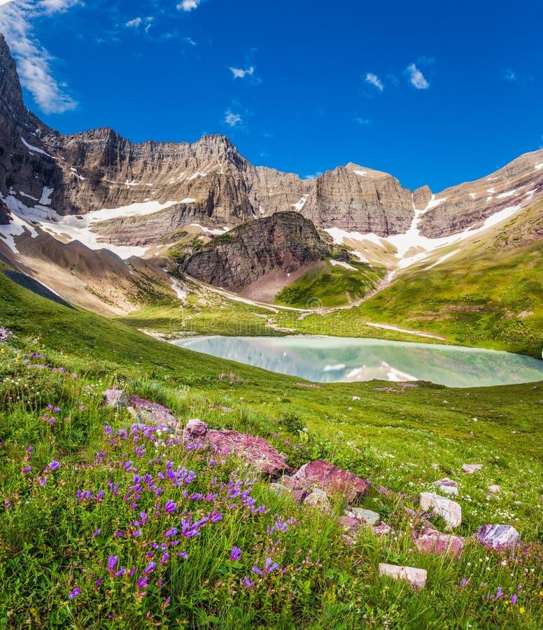 Smällare sjö och lösa liljor i glaciärnationalparken, Montana arkivbild