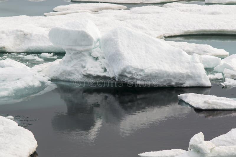 Smältande is i arktisken royaltyfri fotografi