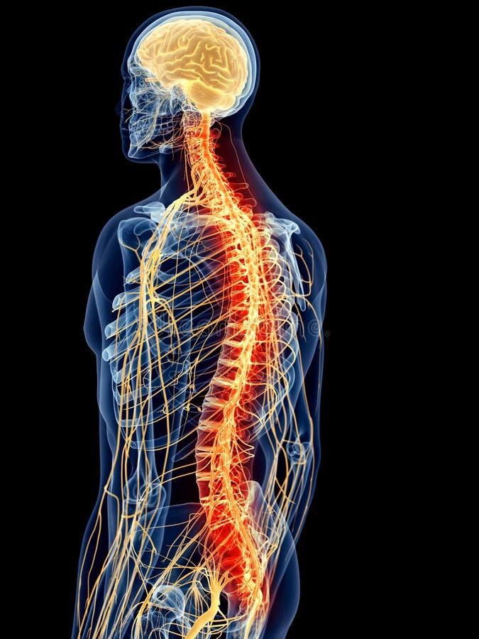 smärtsam rygg stock illustrationer