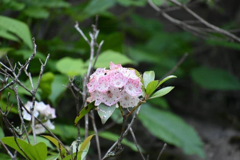 Små blommor i den rökiga bergnationalparken royaltyfria foton