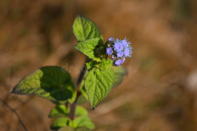 Små blommor med bakgrundssuddighet royaltyfri fotografi