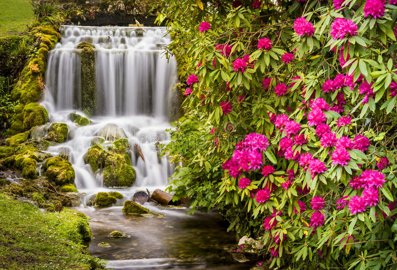 Små Bredy vattenfall och rhododendroner arkivfoton