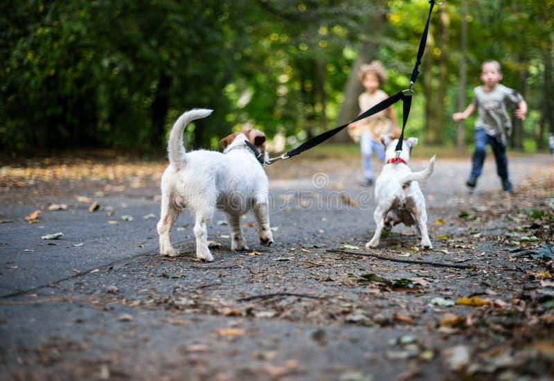 Små caucasian ungar som kör runt om hösten, parkerar med hundkapplöpningen fotografering för bildbyråer
