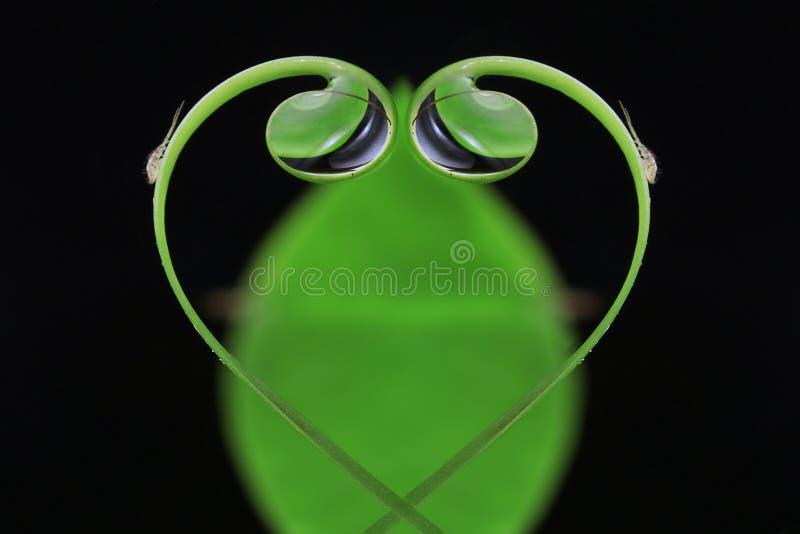 Små droppar för förälskelsebladvatten royaltyfria bilder