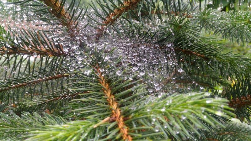 Små droppar för vatten för spindelrengöringsduk mycket små arkivbilder