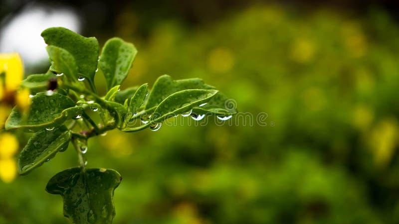 Små droppar på det gröna bladet arkivfoto