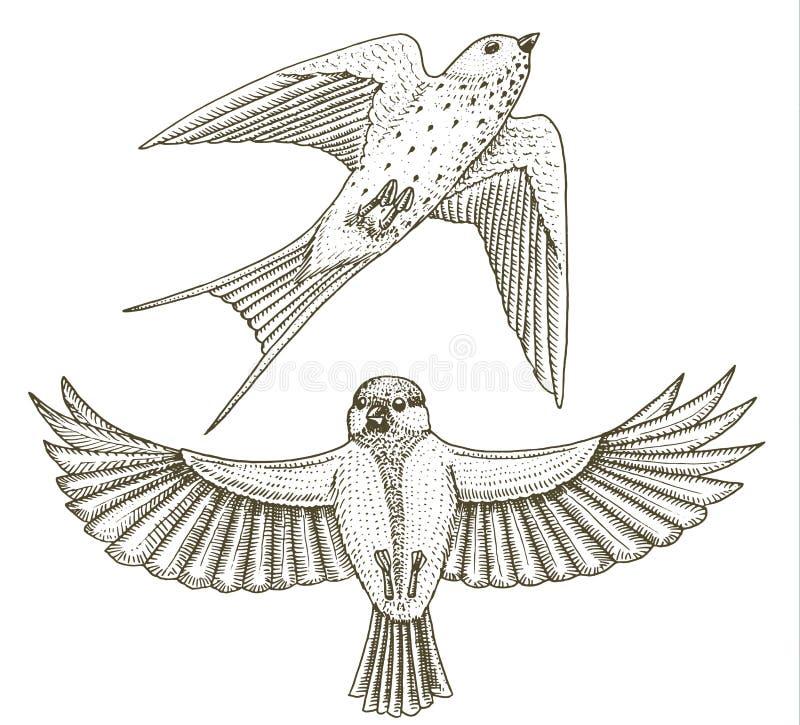 Små fåglar av ladugårdsvalan eller martlet och parus eller mes eller talgoxe i Europa Exotiska tropiska djura symboler bruk stock illustrationer
