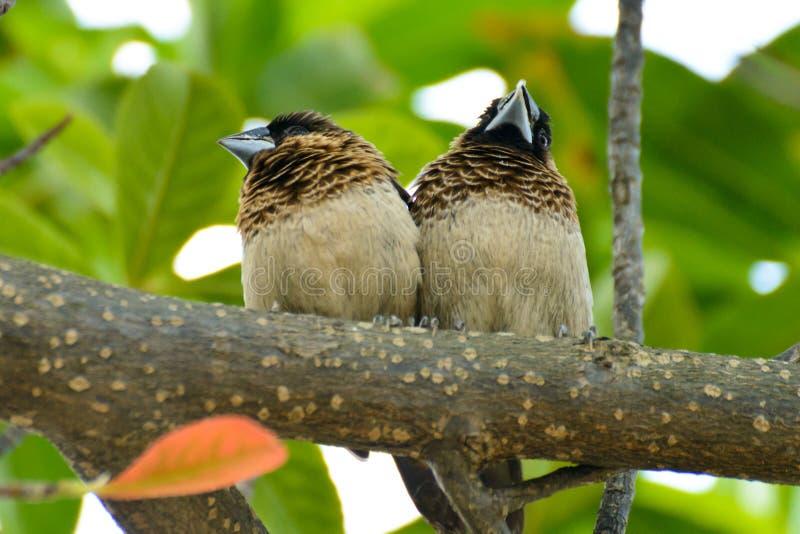 Små fåglar på filialen arkivfoto