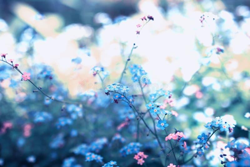 små förgätmigejblommor av olika skuggor av blått och rosa färger fick den trötta på våren soliga trädgården arkivfoto