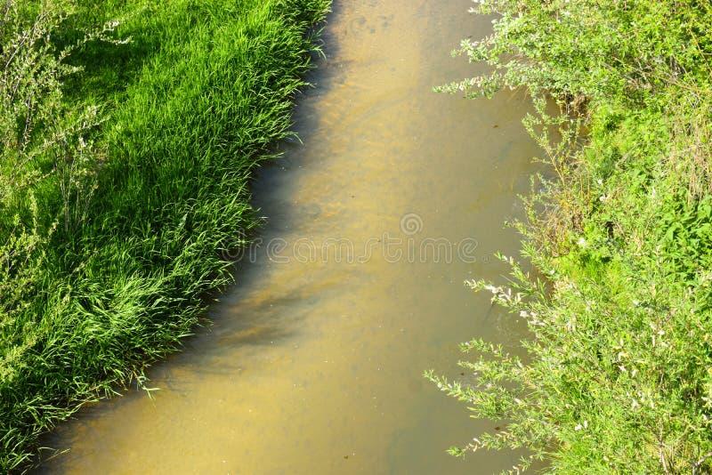 Små fiskar i den lilla floden i en solig dag för vår arkivbilder