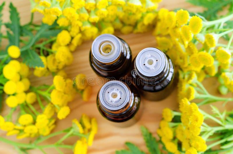 Små flaskor av nödvändig tansyolja (växt- extrakt, tinktur) Stäng sig upp, den bästa sikten, kopieringsutrymme royaltyfri fotografi