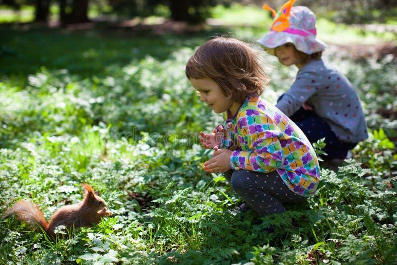 Små flickor med en ekorre fotografering för bildbyråer