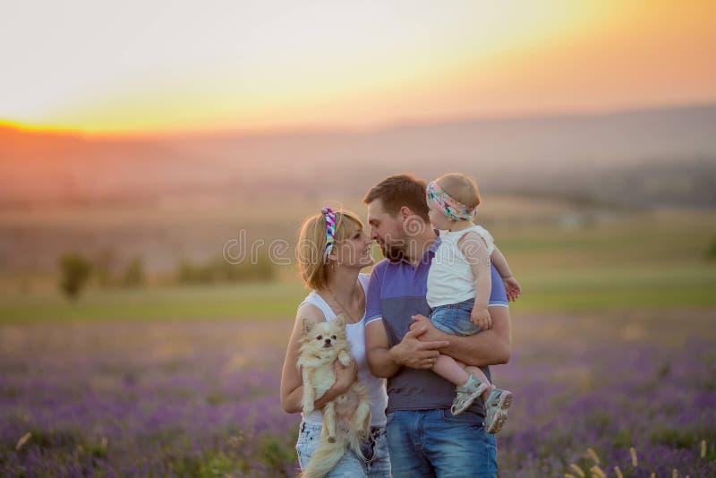Små flickor med hunden och spela falily i lavendelfält royaltyfri foto