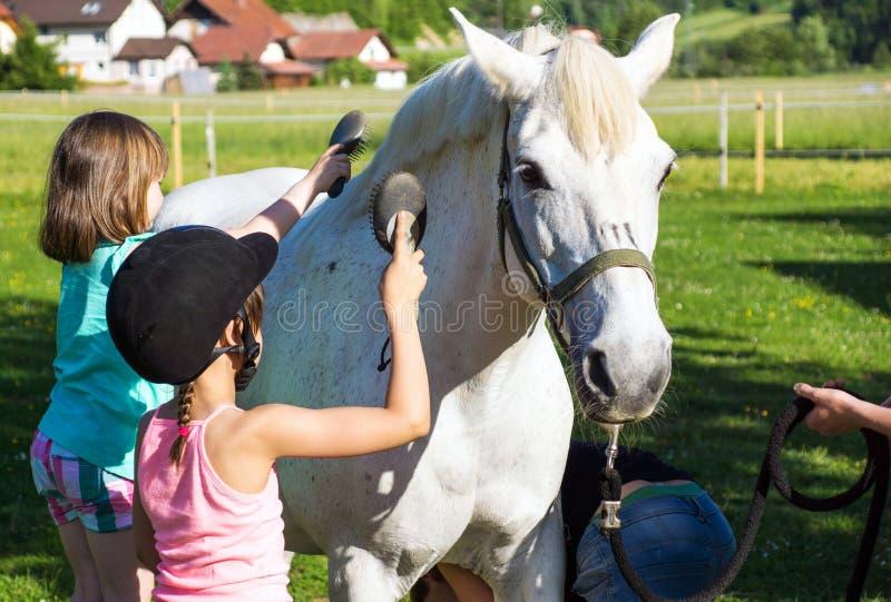 Små flickor som gör ren hästen arkivfoto