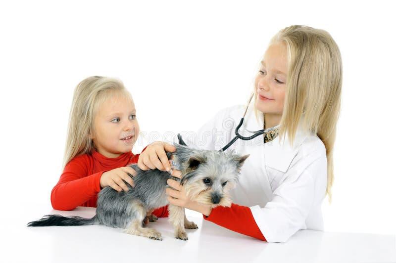 Små flickor som spelar med hunden royaltyfri bild