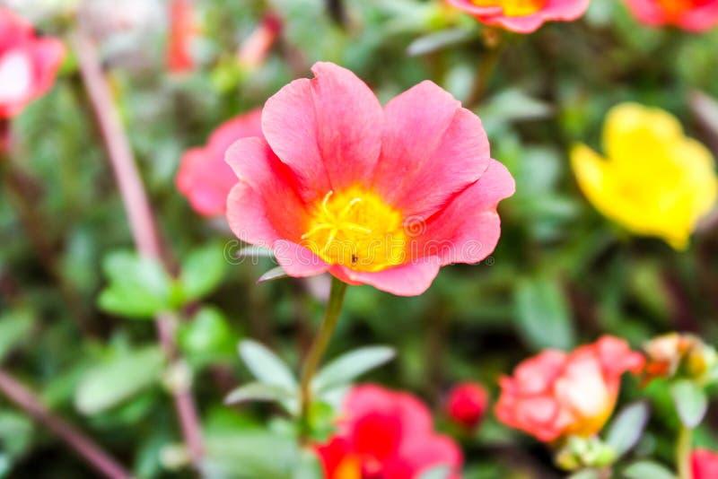 Små floror royaltyfria foton