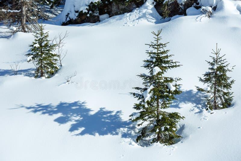 Små granträd på vinterbergkullen arkivfoton