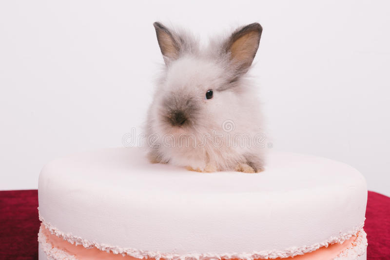 Små gulliga dekorativa kaniner royaltyfri foto