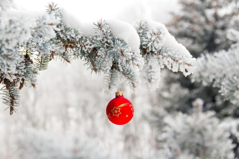 Små hängningar för julleksakboll på snö-täckt sörjer filialen arkivfoto