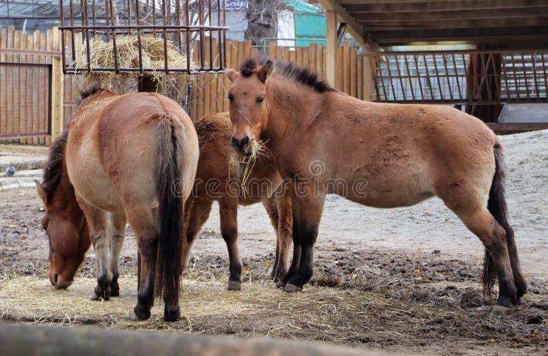 Små hästar på lantgården royaltyfria foton